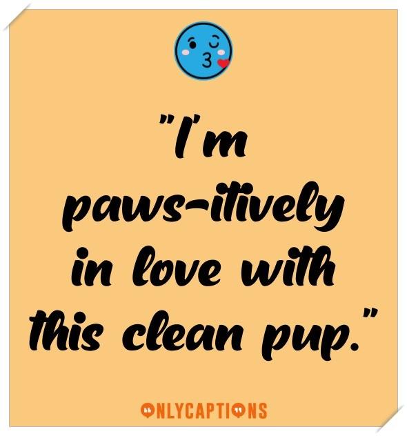 Funny Dog Bath Captions For Instagram 2021