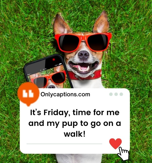 Friday Instagram Captions For Dog Lovers 2021